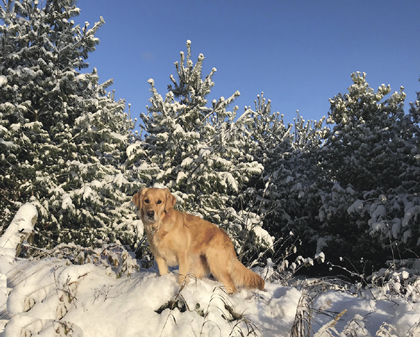 bonnie jane on top of the snow